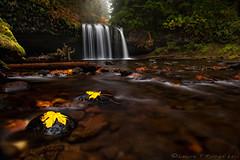 Fall-Less (Lance Rudge) Tags: fall nature oregon waterfalls marioncounty upperbuttecreekfalls lancerudge