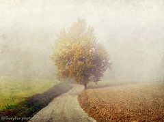 Solitude... ( Susyfox ) Tags: autumn trees texture nature landscapes frog ie simplybeautiful abigfave alberoefoglia simplysuperb artistictreasurechest formag healinglightofthespirit imaginesetphantasmata rememberthatmomentlevel4 rememberthatmomentlevel1 rememberthatmomentlevel2 rememberthatmomentlevel3 rememberthatmomentlevel7 rememberthatmomentlevel9 soulocreativity4 rememberthatmomentlevel5 rememberthatmomentlevel6 rememberthatmomentlevel8 rememberthatmomentlevel10 rememberthamomentlevel4