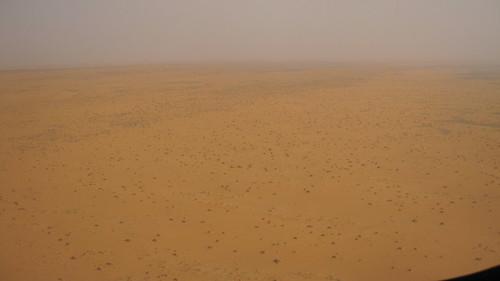 yellow_desert
