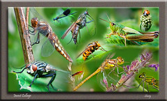 Insect Collage (MShoey1) Tags: park uk wild england west macro london art nature collage closeup digital photoshop butterfly bug insect soldier spider fly dance spring nikon niceshot dragonfly bokeh photoshopped wildlife beetle bugs bee foliage ladybird grasshopper organic damselfly southlondon croydon hoverfly darter wickham d5000 mygearandme ringexcellence blinkagain