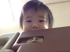 柵から下をのぞきこむとらちゃん(2011/11/8)