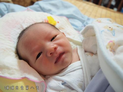 出生第8天1