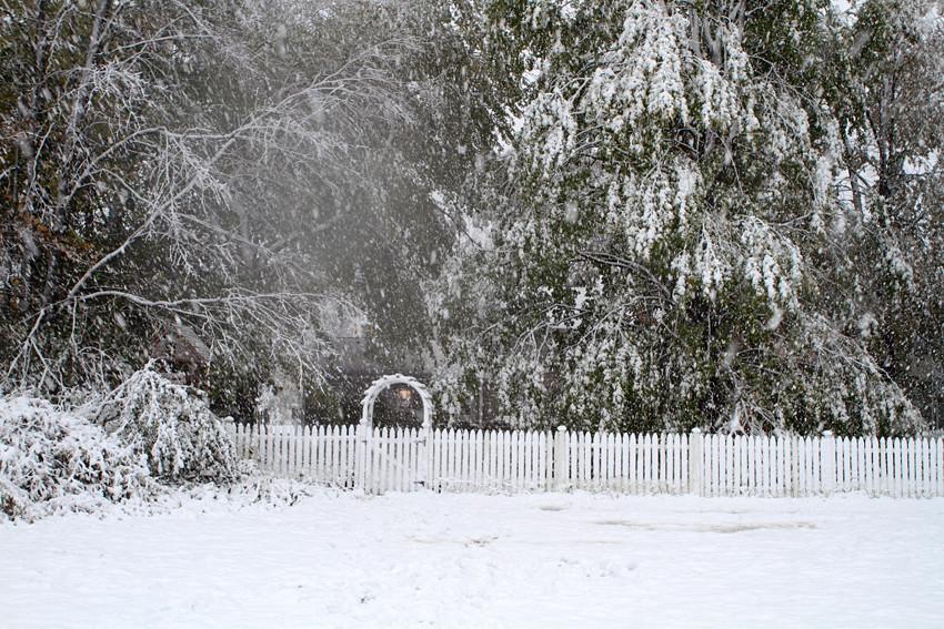 snow arbor