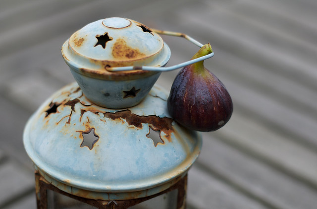 the fig lantern