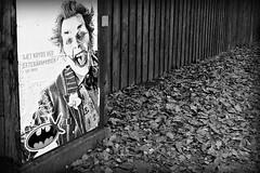 "TP1 ""Autumn Madness"" (Jens Rost) Tags: bw fall autum monocrome thejoker efterr jokeren tp1 lvfald p1180831 batmanposter batmanplakat"