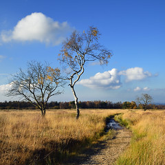 High Fens - Hautes Fagnes (pierre hanquin) Tags: blue autumn trees cloud color colour tree fall colors clouds automne landscape geotagged nikon europa europe colours belgium belgique couleurs belgi bleu ciel arbres blau nuages paysage landschaft spa arbre couleur hautesfagnes 1685 d7000 1685mmf3556gvr hanquin