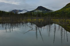 Toad River (supaflug) Tags: wood wild sky canada forest britishcolumbia yukon alaskahighway toadriver supaflug