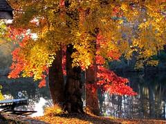 Serenity (David Hoffman '41) Tags: autumn red sunlight lake nature crimson yellow silver reflections gold evening virginia dock calm serenity soe tranquil muted charlottecourthouse charlottecounty
