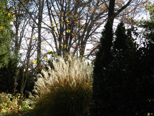 November Garden 137