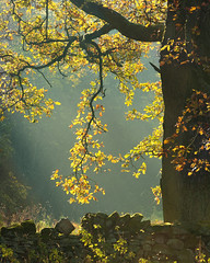 Lofthouse Autumn Light II (rgarrigus) Tags: autumn england sun tree leaves landscape branches yorkshire foliage stonewall backlit nidderdale backlighting lofthouse greatphotographers garrigus robertgarrigus robertgarrigusphotography