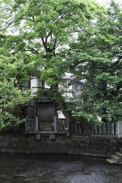 110522_054523_長浜朝散歩_日吉神社