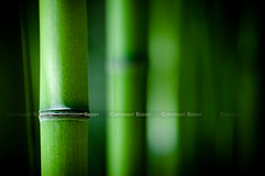 Bambou zen (Beboy_photographies) Tags: macro green nature court de relax grande photo photographie dof vert bamboo zen short relaxation bambou champ ouverture photographies profondeur relaxant beboy