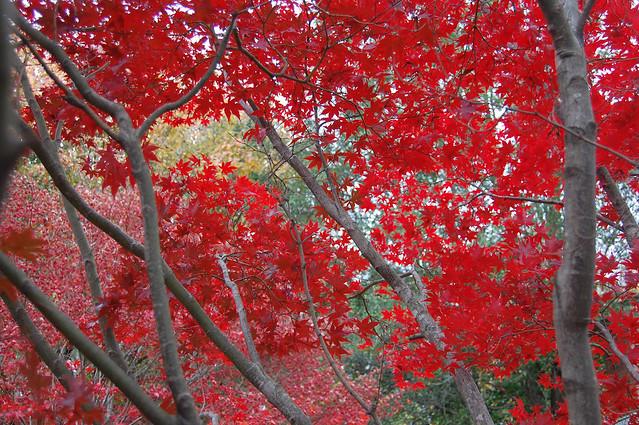 Nov11-R-leaffall_0632