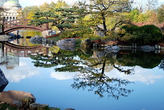 Osaka Garden Lagoon (Explored) (StGrundy) Tags: bridge autumn usa chicago color fall japan reflections illinois nikon seasons unitedstates seasonal lagoon il foliage explore hydepark museumofscienceandindustry jacksonpark publicpark osakagarden chicagoparkdistrict explored d80 woodedisland stgrundy