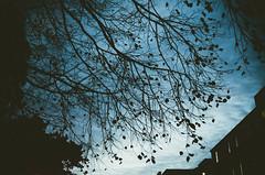 (thisisforlovers) Tags: blue trees ireland sky dublin leaves azul clouds hojas photography grain filter cielo nubes árbol 1855 grano fotografía ramas filtro thisisforlovers nikond7000 andreadorantes
