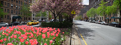 Park Avenue (vegetablepredator) Tags: city nyc flowers urban usa ny newyork yellow fleurs spring manhattan taxi wideangle panoramic printemps ville panoramique urbain autostich paarkavenue