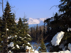 Anchorage Alaska (MarculescuEugenIancuD5200Alaska) Tags: alaska anchorage agora deepavali artdigital fleursetpaysages exoticimage outstandingromanianphotographers lelitedespaysages