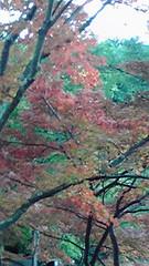 修善寺虹の郷紅葉狩りの写真