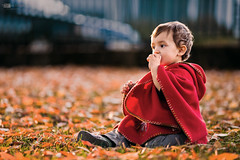 Abel (Alucardo) Tags: autumn boy red portrait orange baby sun david cute fall leaves canon hair photography golden warm photographie dof child little bokeh thomas young sunny ground sit l f2 abel parc 135mm limoges thomasdavid 5d2 5dii thomasdavidphotography thomasdavidphotographie