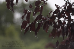 (mitramirae) Tags: morning trees summer black beautiful leaves rain canon 50mm for is lyrics wind you bokeh thing like run days here dont there wait nothing showers miss those sooc