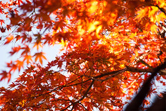 虹の郷の紅葉の写真の写真