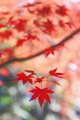 (fravenang) Tags: autumn fall nature japan landscape temple kyoto      eikando   canon7d