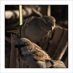 PruebaPajaros-97 (Jose Luis Durante Molina) Tags: naturaleza color nature birds animals pajaros animales pruebas impresion terminada cuadrada joseluisdurante