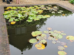 Reflections (wallygrom) Tags: england reflection pond waterlily westsussex waterlilies nymphaea lilypond angmering ecclesdenmanor rnligardenparty