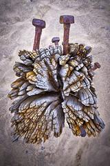 splinter from the cross (Jez Blake) Tags: wood beach sand rusty bolts groyne humber eroded eastyorkshire spurnhead