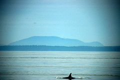 Orca and Mountains