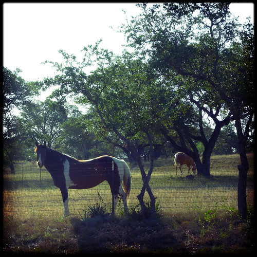 Horsies along Wolfridge Rd.