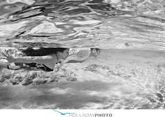 hawaii-engagement-photography_72 (holladayphoto) Tags: waterphotographer hawaiiphotos hawaiiweddings holladayphoto