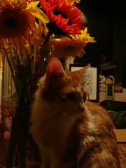 Cat & Flowers (Liz Nance Photography) Tags: flowers pet cat kitten sunflower
