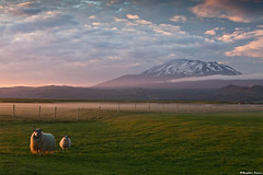 "Mountain Hekla ""Gateway to Hell"" at sunrise (skarpi - www.skarpi.is) Tags: morning summer sky horses horse white mountain snow animals island volcano iceland sheep farm south farming july kind lamb vulcan volcanoes wonderland eruption sland kindur active erupting snowhorse hekla icelandic stratovolcano maountain 2011 hestar hestur fjll suurland fjall southiceland gatewaytohell lmb mthekla giring horsesinsnow skarpi landbnaur suurlandslands mountainhekla slenskfjll sauir skarphinnrinsson suf"