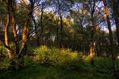 Foxhouse_110609_0014 Light (Steve Bark) Tags: trees light nature landscape nikon derbyshire peakdistrict ferns hdr foxhouse d90 copyrightstevebark