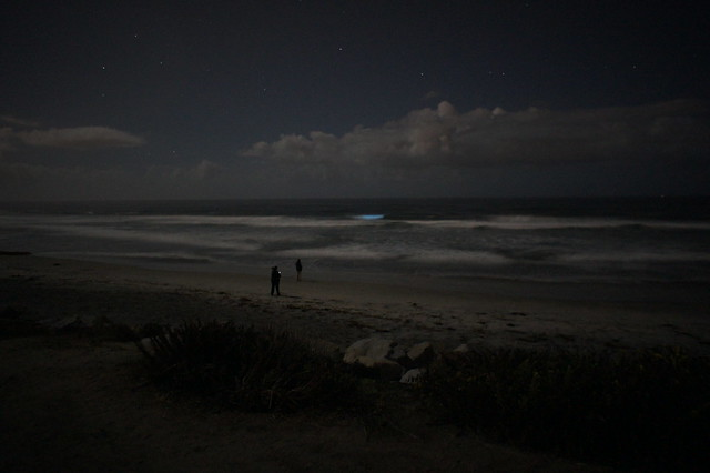 Torrey Pines State beach at night