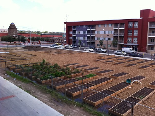 Alvarado Urban Farm by ABQturkey