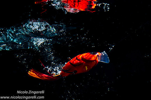 Lure diving in the water, studio shot with two lights on a black background by Nicola Zingarelli