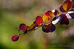 wellcome autumn :)) (NURAY YUZBASI) Tags: autumn detail macro fall closeup leaf branch bokeh dal ankara hazan sonbahar yaprak gz canonef100mmf28macro canonrebelxti colorphotoaward autumn2011