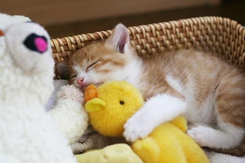 Kitten Log