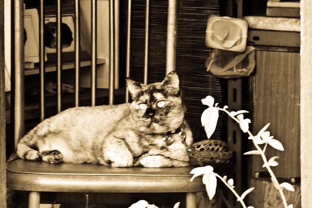 Today's Cat@2011-10-22