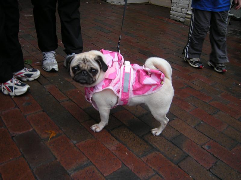 Pink Pug!