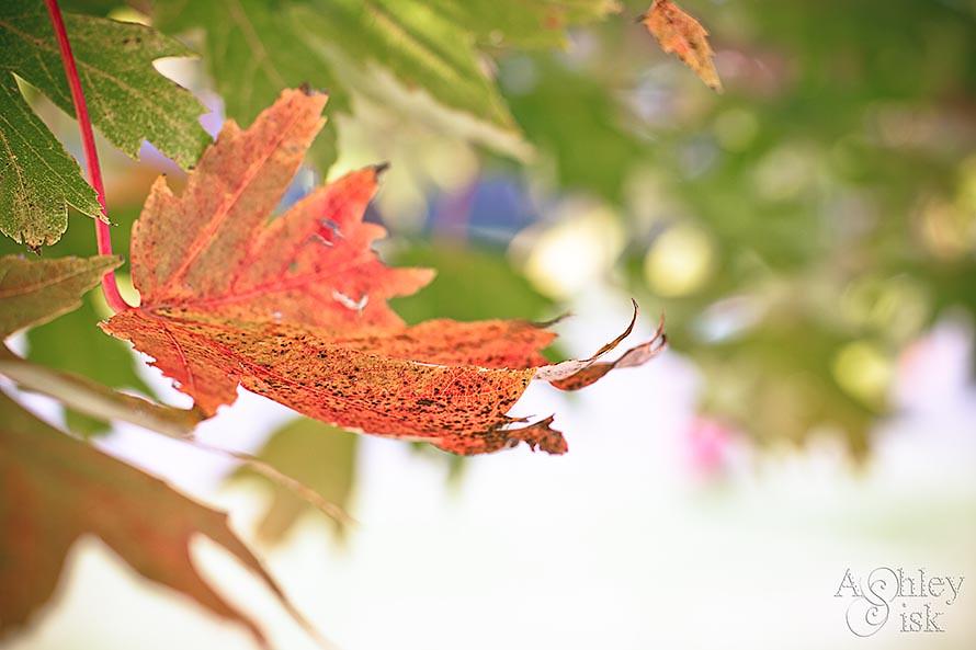 Autumn Leaf RS