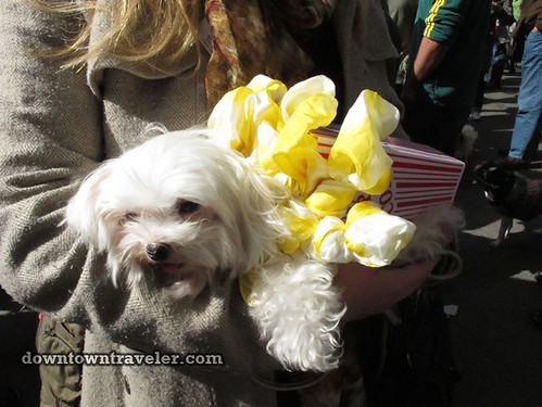 Tompkins Park Halloween Dog Parade_Maltese in popcorn costume