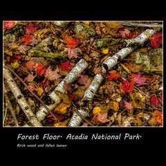 Forest Floor. (tim, TimCooperPhotos.com) Tags: landscape us flickr maine newengland northamerica timcooper