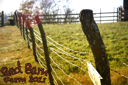 Red Barn Farm 2011