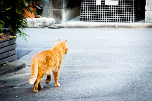 Today's Cat@2011-10-30