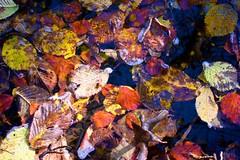 Autumn Colors VIII (limstyle) Tags: forest autumncolors starnberg maisingerschlucht canons95