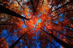 Heart of Red Trees, Shenandoah Valley National Park (Yohsuke_NIKON_Japan) Tags: autumn usa nature pen olympus shenandoah hdr photomatix flickraward epl2 fisheyephotomatix