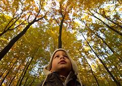 enchanted forest (demeroli) Tags: wood trip travel autumn colour yellow forest canon eos leaf kid europe sigma son roland 7d traveltips sigma1020 flowerscolors diamondclassphotographer eos7d flickraward 8traveltrip 8traveltips flickraward5